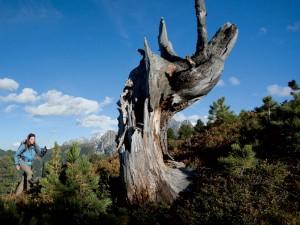 Wandern im Zillertal | Hotel THERESA